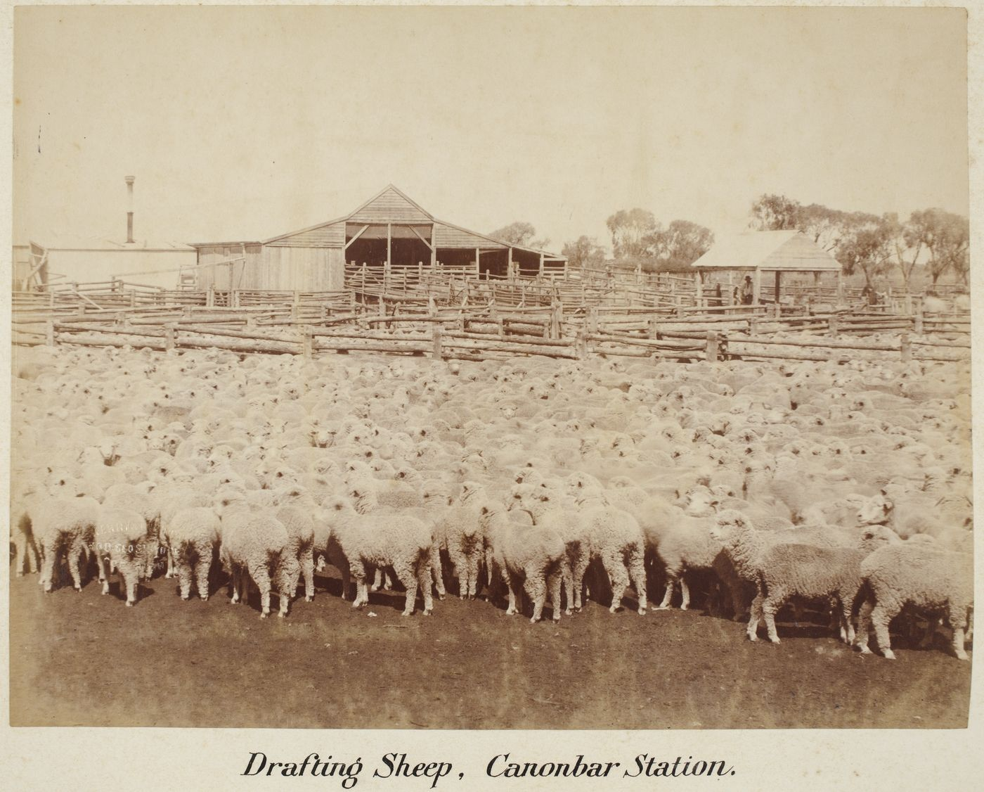 sheepstation